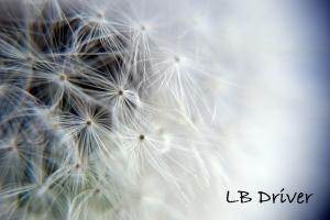 dandelion sig